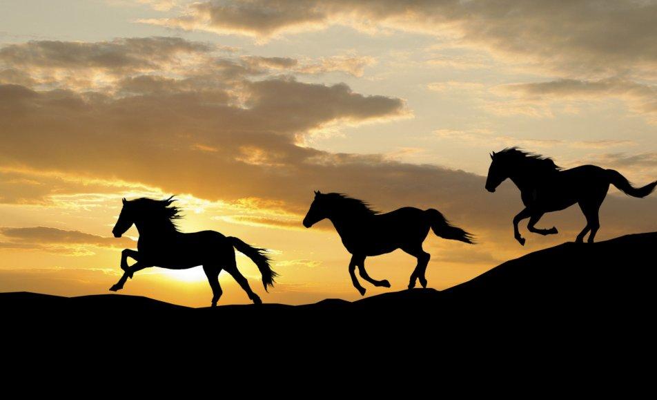 حيوية الخيول
